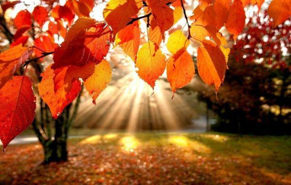 Чем прекрасен Харьков осенью?